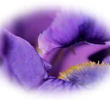Iris by aprilann