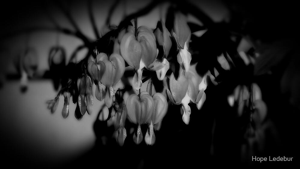 Bleeding Hearts_2 by Hope Ledebur