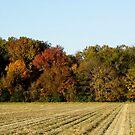 Fall Field by WildestArt