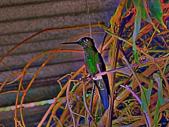 Mindo Hummingbird Artwork by Al Bourassa