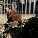 bear in a cage by mkokonoglou
