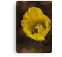 Bumbly in the Cactus Bloom! Canvas Print