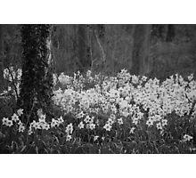 Woodland flowers! Photographic Print