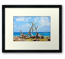 Driftwood in Bonaire, Dutch Caribbean Framed Print