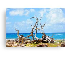 Driftwood in Bonaire, Dutch Caribbean Metal Print