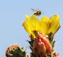 Buzzing In For A Landing! by heatherfriedman