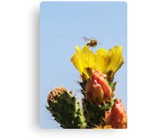 Buzzing In For A Landing! Canvas Print