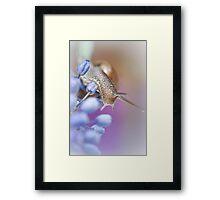 Snail on Grape Hyacinths Framed Print