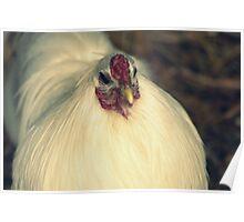 white chicken  Poster