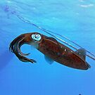 Underwater Squid by emilyduwan