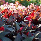 Flower Garden by Matthew Williams