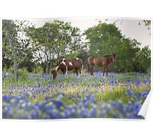 Bluebonnet images - Horses in in a Field of Bluebonnets in Ennis, Texas Poster