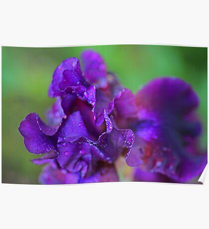 Purple Macro Poster