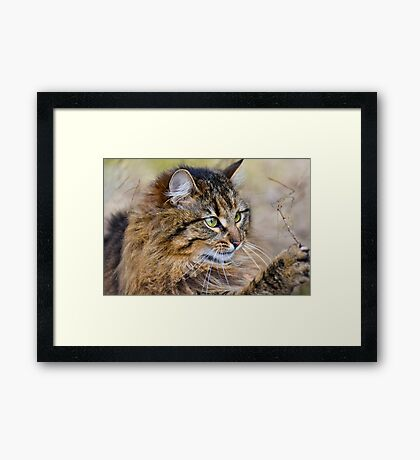The Lioness playing in the garden Framed Print