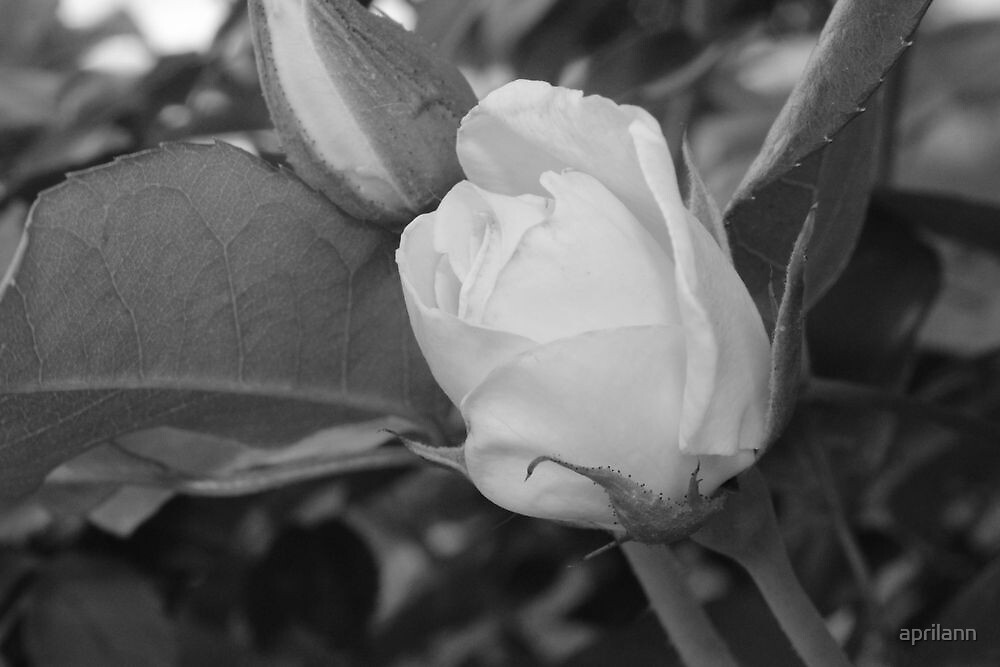 Beautiful Colorless by aprilann