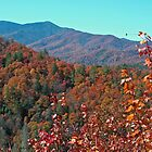 Fall Colors by Jonathan Hill, Jr.