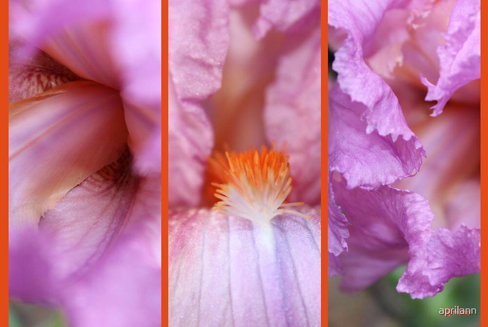 Iris Collage by aprilann