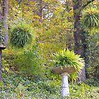 Hanging Garden by NatureGreeting Cards ©ccwri