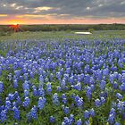 Bluebonnet pictures - Sunrise over a Bluebonnet Field in Ennis, Texas 1 by RobGreebonPhoto