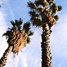 twin palms by shannonbrianna