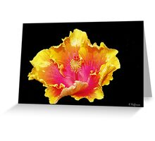 Hibiscus Fire Greeting Card