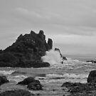 Oregon Coast by Robert  Miner