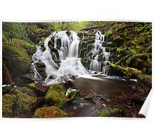 Rainforest rewards  Poster