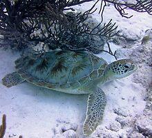 Turtle by emilyduwan