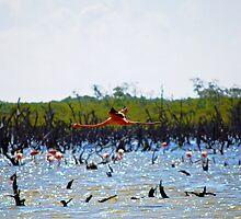 Flamingo in Flight by emilyduwan