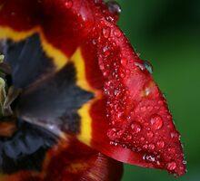 tulip by Arakal Platt-Cassella
