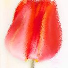 Red Tulip by Pamela Holdsworth