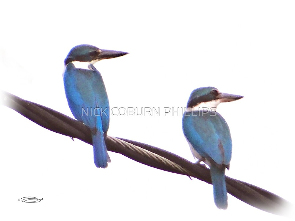 THE KINGFISHERS by NICK COBURN PHILLIPS