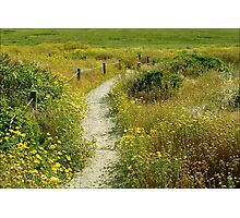 May Your Path Be Filled With Sunshine Photographic Print