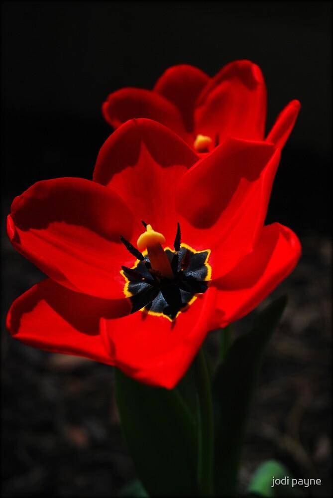 Spring Has Sprung!! by jodi payne