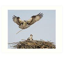 Building a nest Art Print