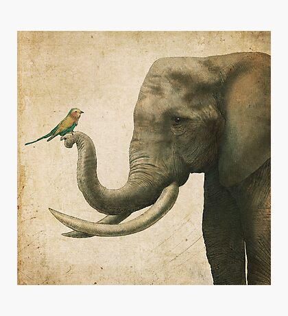 A New Friend (colour option) Photographic Print