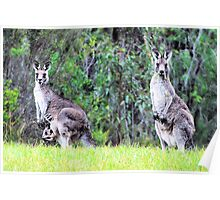 Roos in Twos Poster
