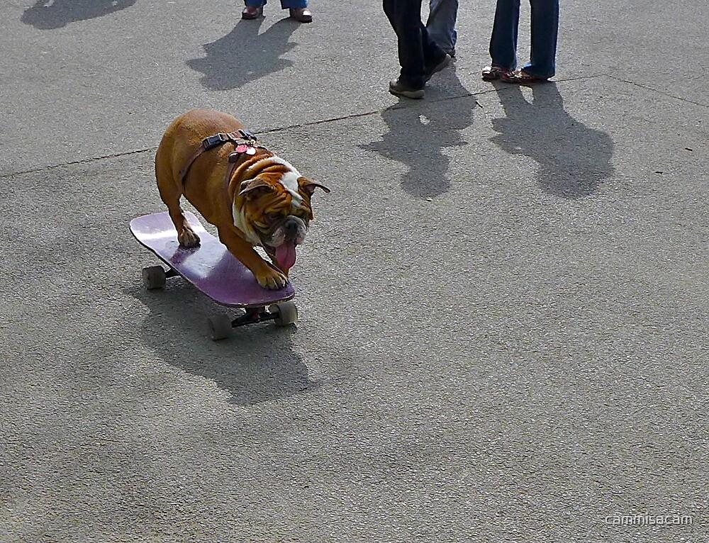 Skateboarding Bulldog by cammisacam