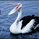 Pelican dribbler by bekyimage