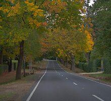 Mt.Macedon Road by Tarni West
