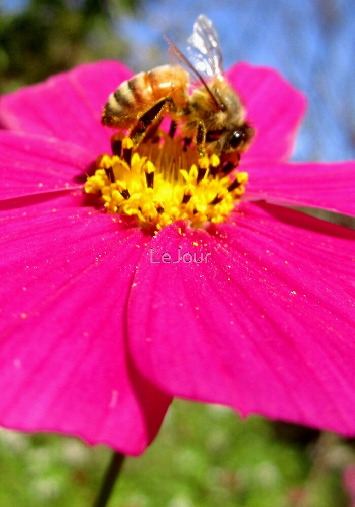 Bee on pink flower by LeJour