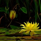 337 Yellow Water Lily Flower by Larry3