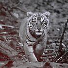 Tiger cub by Designer023