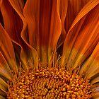 Petals by Adrian Harvey
