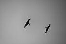 Birds of Prey by Anne Staub