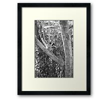 music and trees xo Framed Print