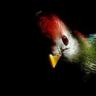 Colourful parrot on black background by PhotoStock-Isra
