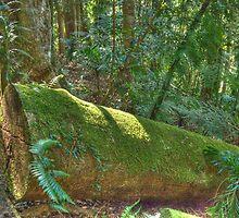Rainforest Walk, Dorrigo National Park, NSW by Adrian Paul