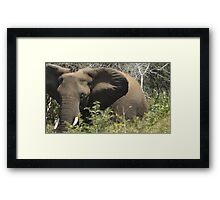 Up Close and Friendly Framed Print