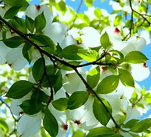 From Under My Dogwood Tree by ctheworld